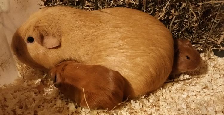 buff nest